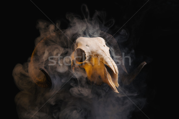 Ram skull with horns covered in smoke  Stock photo © Elisanth
