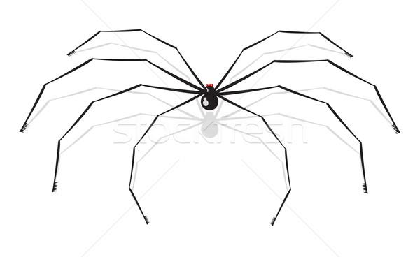 Pók nagy izolált fehér természet terv Stock fotó © Elisanth
