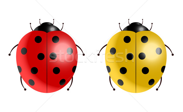 Vector illustration of ladybugs  Stock photo © Elisanth