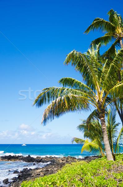 Palmeiras oceano árvore Havaí céu Foto stock © EllenSmile