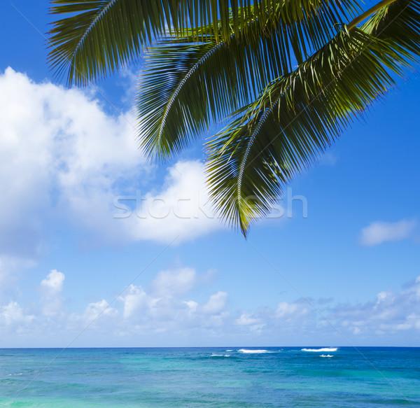 ヤシの葉 海 ビーチ ハワイ 空 ストックフォト © EllenSmile