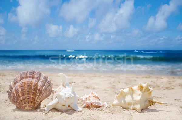 Conchas praia poucos praia água mar Foto stock © EllenSmile