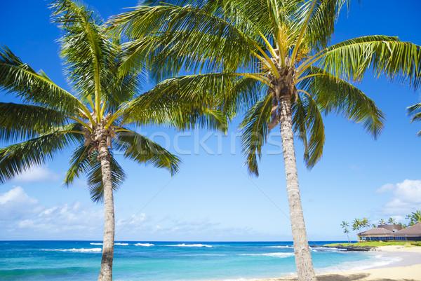 Palmeiras praia Havaí árvore arenoso Foto stock © EllenSmile