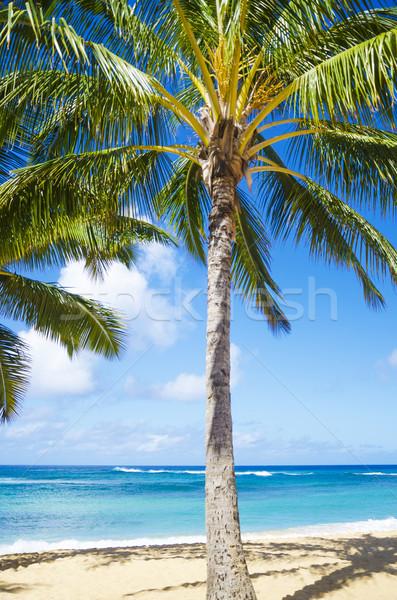ストックフォト: ヤシの木 · 砂浜 · ハワイ · ツリー · 砂の