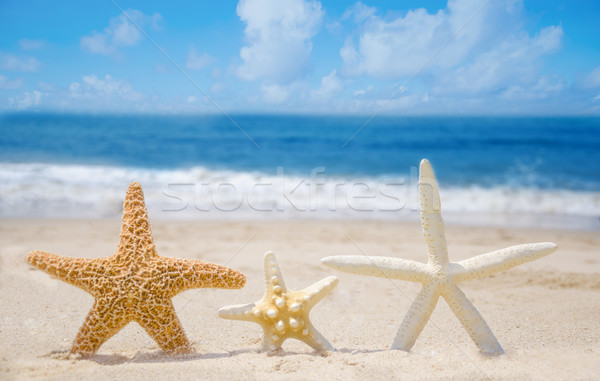Três praia praia água peixe mar Foto stock © EllenSmile