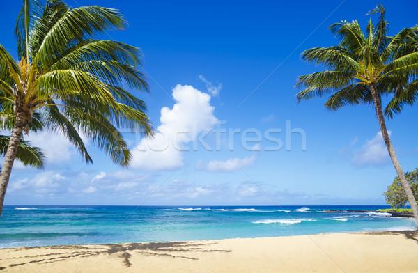 ヤシの木 砂浜 ハワイ ツリー 砂の ストックフォト © EllenSmile