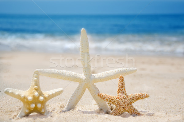 Three Starfishes on a beach Stock photo © EllenSmile