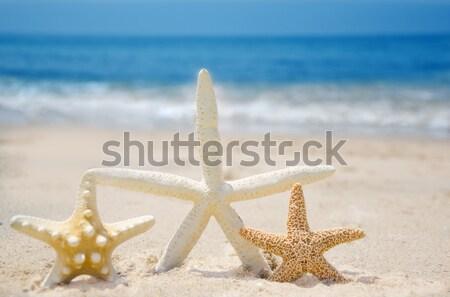 カップル ビーチ 砂浜 水 魚 海 ストックフォト © EllenSmile
