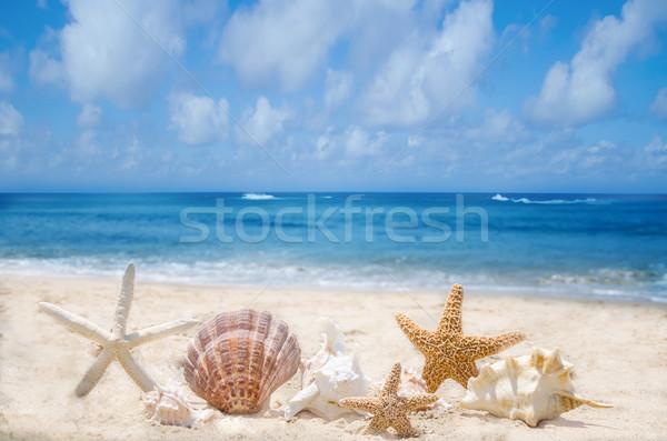 Conchas praia poucos praia água natureza Foto stock © EllenSmile