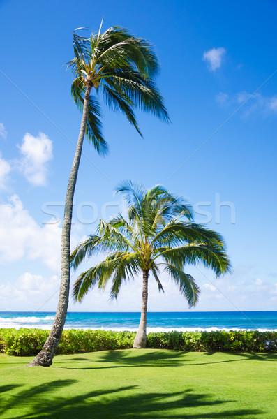 ヤシの木 海 ツリー ハワイ 空 ストックフォト © EllenSmile