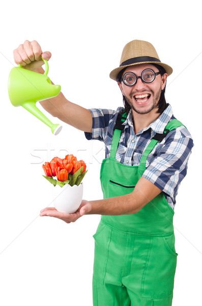 Jóvenes funny jardinero tulipanes regadera aislado Foto stock © Elnur
