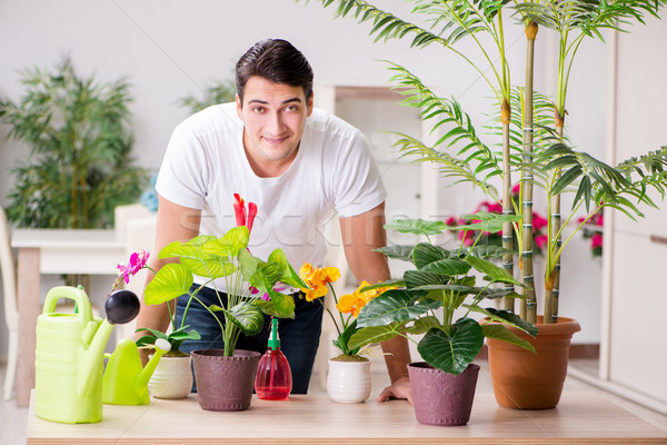 Man taking care of plants at home Stock photo © Elnur