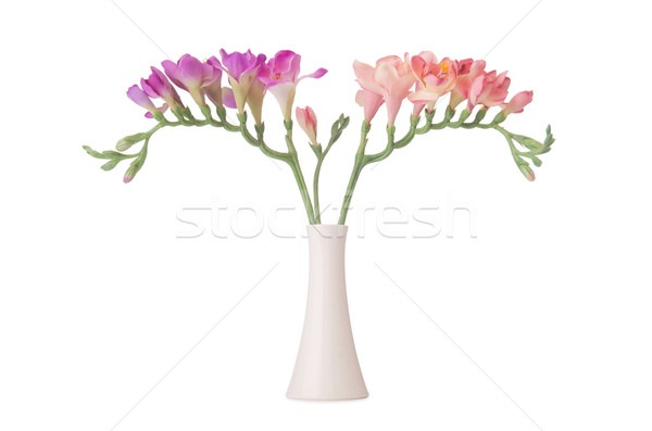 Vase with orchid flower isolated on white Stock photo © Elnur