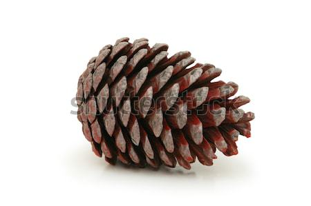 Christmas tree pine cones isolated on white Stock photo © Elnur