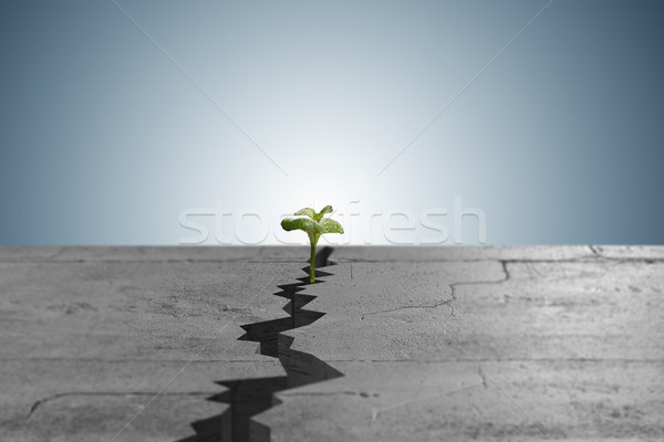 New life concept with sprout growing through crack Stock photo © Elnur