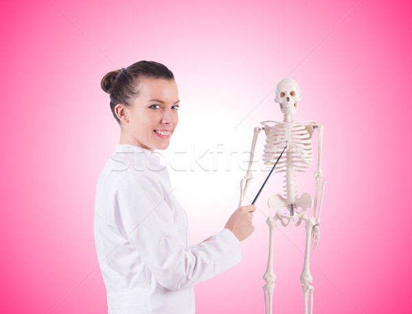 Doctor with skeleton against the gradient Stock photo © Elnur