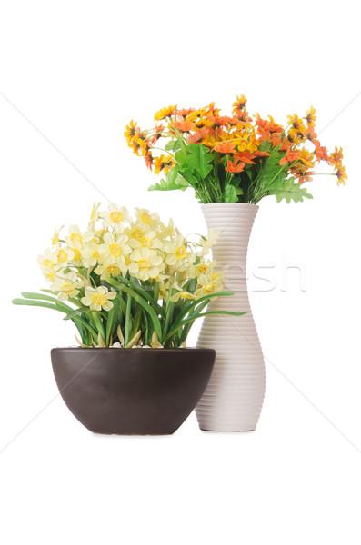 Daisy kamille bloemen geïsoleerd witte bloem Stockfoto © Elnur