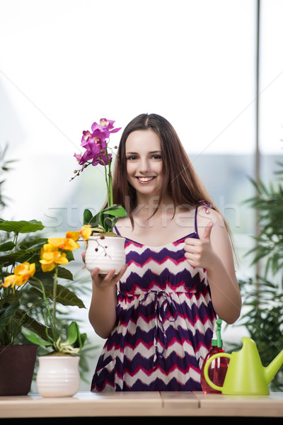 Young woman taking care of home plants Stock photo © Elnur