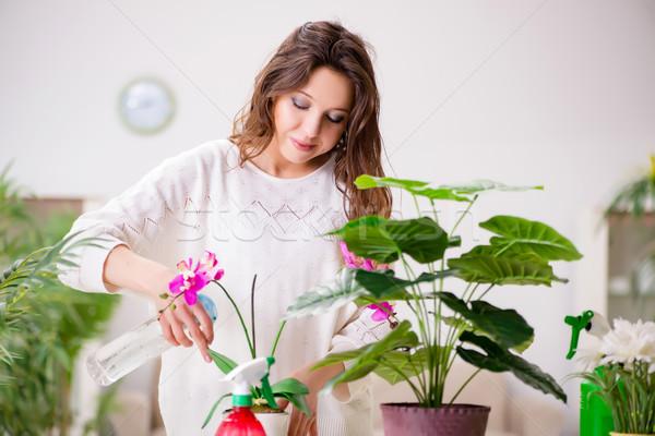 Stock fotó: Fiatal · nő · néz · növények · otthon · virág · virágok