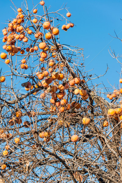 Persimmon fruits on the tree Stock photo © Elnur