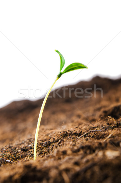 Green seedlings in new life concept Stock photo © Elnur
