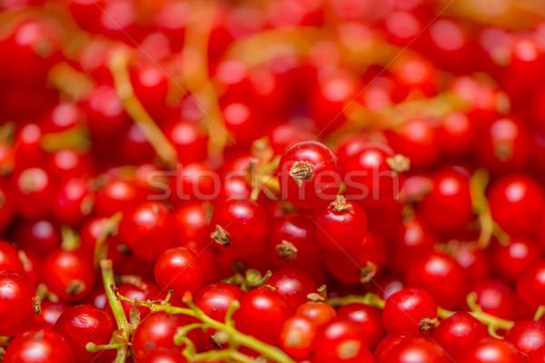 Vermelho groselha textura comida natureza Foto stock © Elnur