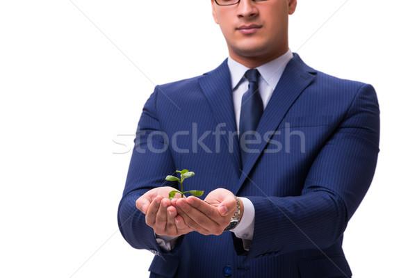 бизнесмен зеленый изолированный белый дерево Сток-фото © Elnur