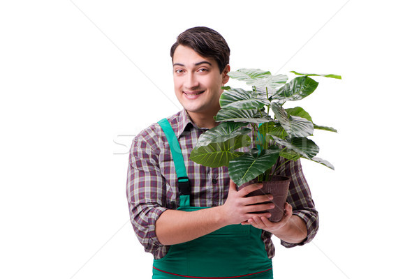 Young man gardener isolated on white Stock photo © Elnur