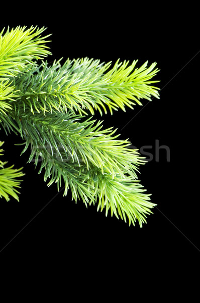 Stock photo: Christmas tree isolated on the black background