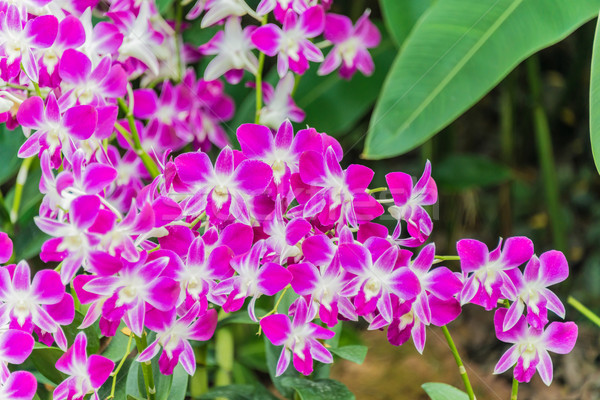 Colourful orchid flowers on bright summer day Stock photo © Elnur