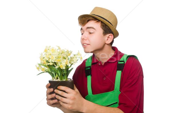 Jóvenes jardinero flor aislado blanco jardín Foto stock © Elnur
