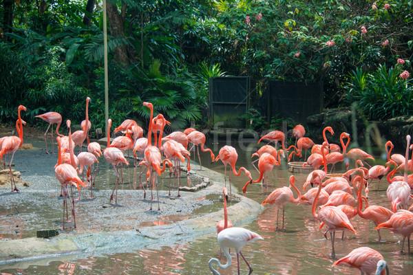 Flamingó madarak tavacska víz háttér szépség Stock fotó © Elnur