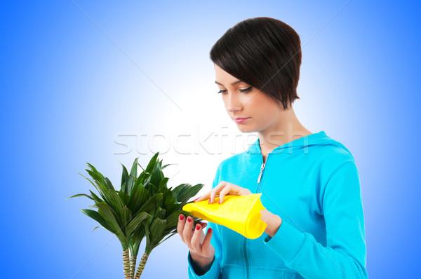 Fiatal nő locsol növények izolált fehér nő Stock fotó © Elnur