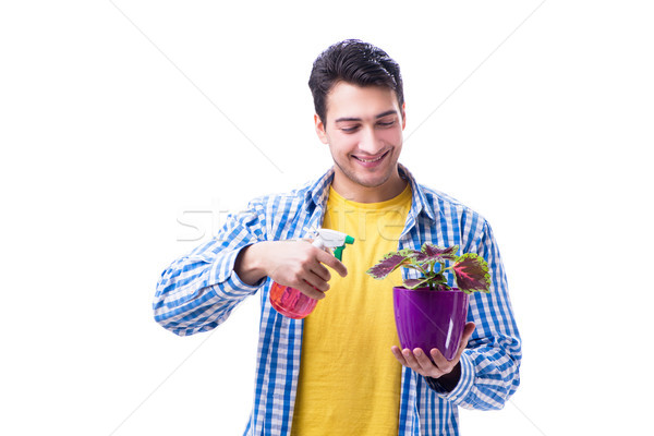 Gardener florist with a flower in a pot isolated on white backgr Stock photo © Elnur