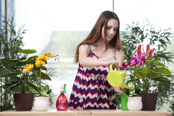 Fiatal nő elvesz törődés otthon növények virág Stock fotó © Elnur