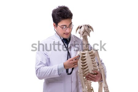 Doctor with dog skeleton isolated on white background Stock photo © Elnur
