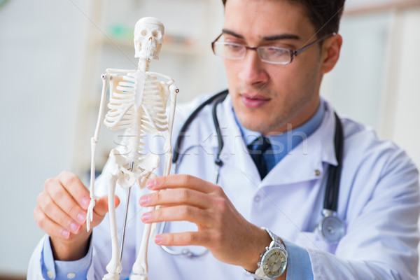 врач студент изучения костях скелет человека Сток-фото © Elnur