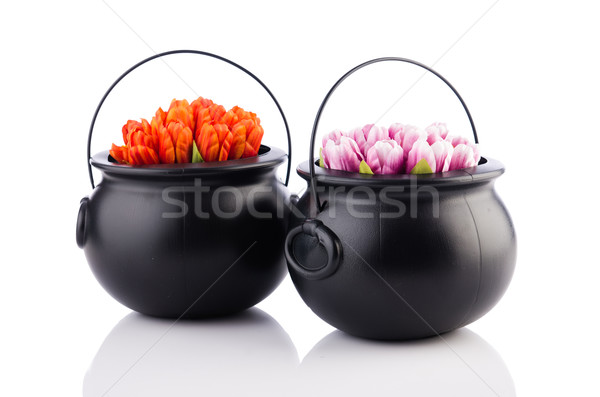Two pots with tulip flowers isolated on the white Stock photo © Elnur