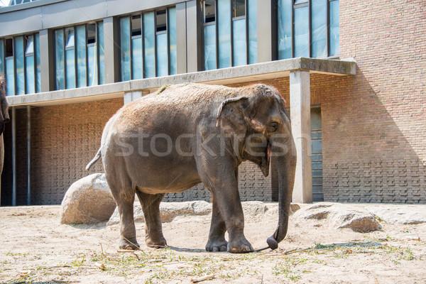 Olifant dierentuin zomer dag natuur achtergrond Stockfoto © Elnur