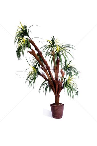 Artificielle palmier isolé blanche arbre été Photo stock © Elnur