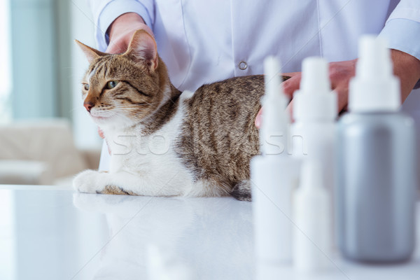 кошки ветеринар регулярный проверить вверх служба Сток-фото © Elnur