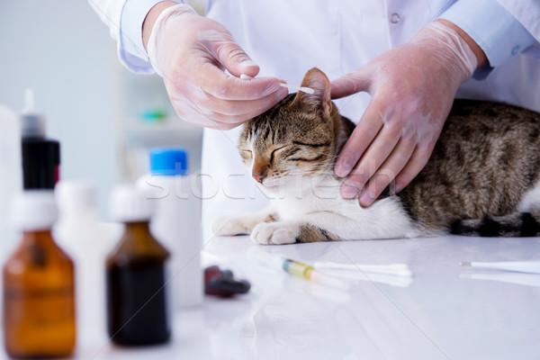 Cat visiting vet for regular check up Stock photo © Elnur