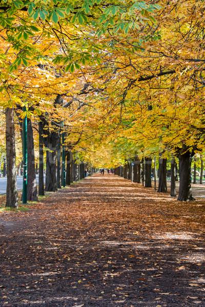 Callejón árboles otono día árbol forestales Foto stock © Elnur
