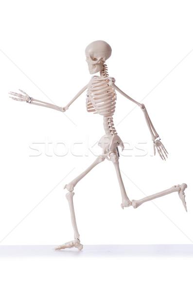 Esqueleto isolado branco homem médico corpo Foto stock © Elnur