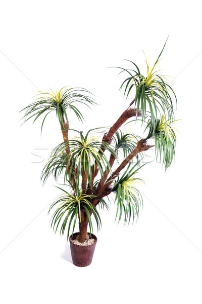 Artificial palm tree isolated on white background Stock photo © Elnur