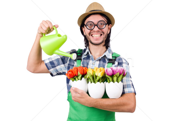 Young funny gardener with tulips and watering can isolated oin w Stock photo © Elnur