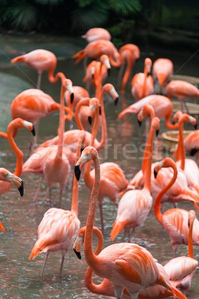 Flamingo aves lagoa água fundo beleza Foto stock © Elnur