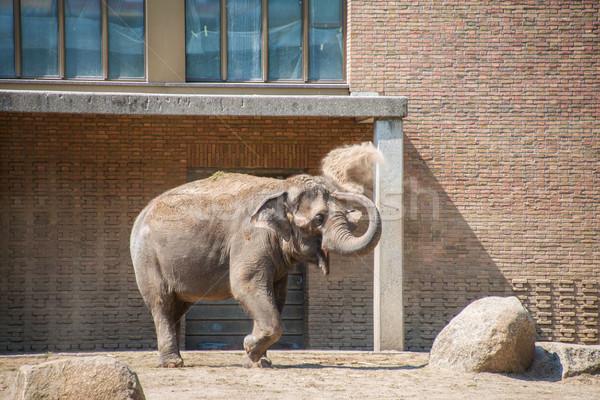 Elefánt állatkert nyár nap természet háttér Stock fotó © Elnur
