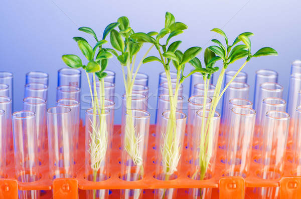 Lab experiment with green seedlings Stock photo © Elnur