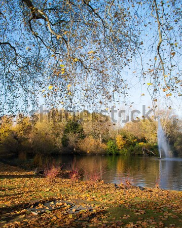 Fall autumn season in the forest Stock photo © Elnur